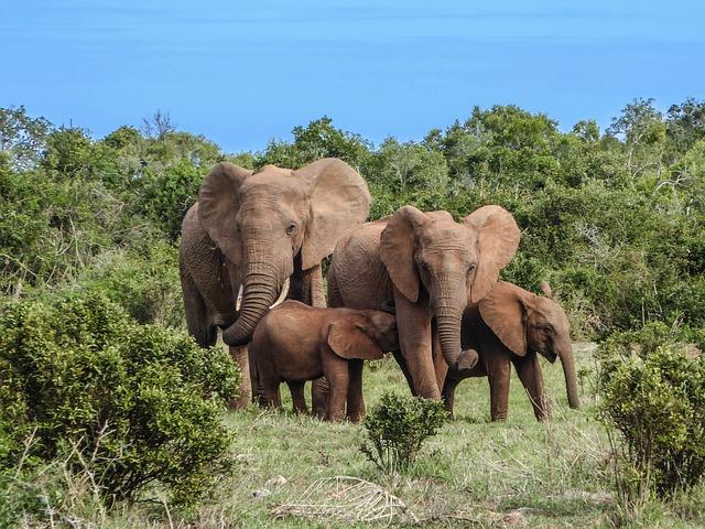 sloní rodina